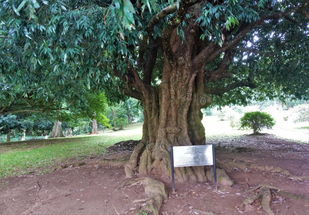 Железное дерево кий из железного дерева для русского бильярда